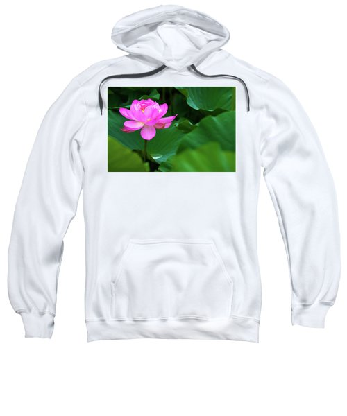 Blooming Pink Lotus Lily Sweatshirt