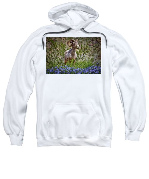 Blooms And Bighorn In Anza Borrego Desert State Park  Sweatshirt