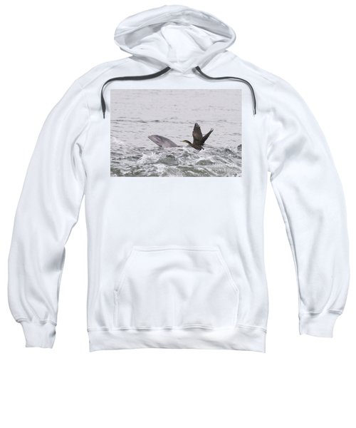 Baby Bottlenose Dolphin - Scotland #10 Sweatshirt