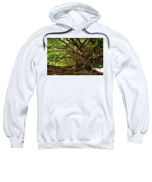 Branches And Roots Sweatshirt