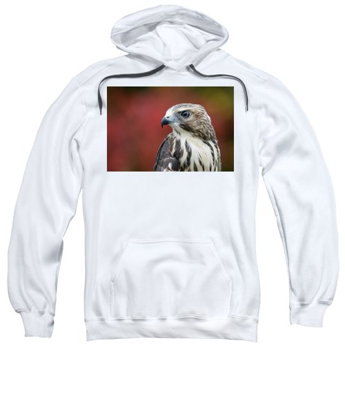 Broad Wing Hawk Sweatshirt