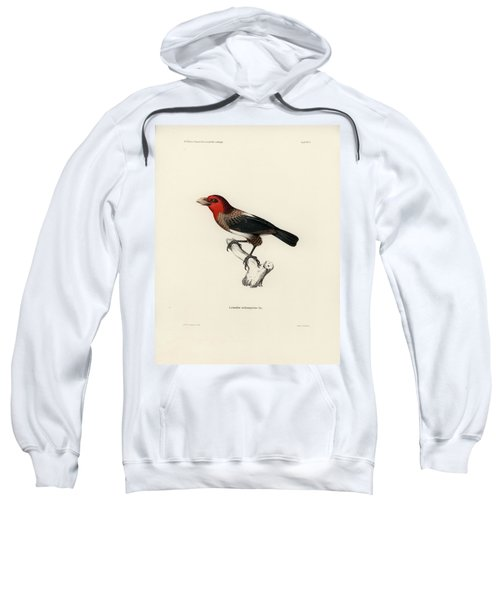 Sweatshirt featuring the drawing Brown-breasted Barbet, Pogonornis Melanopterus by Breck Bartholomew