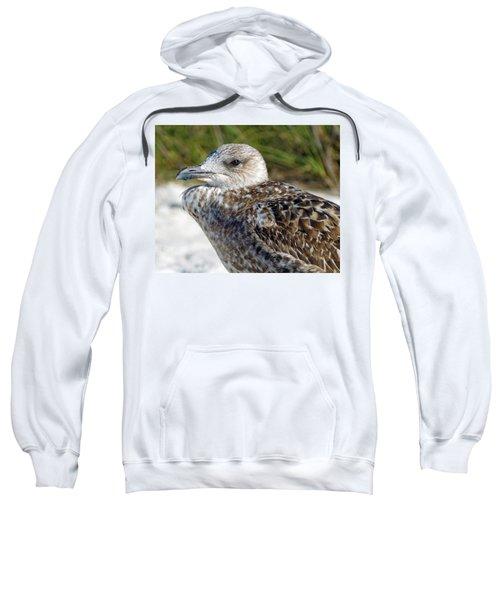 Brown Gull At Wiggins Pass Sweatshirt