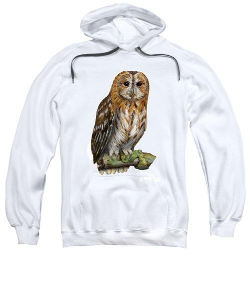 Brown Owl Or Eurasian Tawny Owl  Strix Aluco - Chouette Hulotte - Carabo Comun -  Nationalpark Eifel Sweatshirt