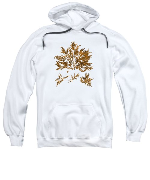 Sweatshirt featuring the mixed media Brown Seaweed Marine Art Chylocladia Clavellosa by Christina Rollo