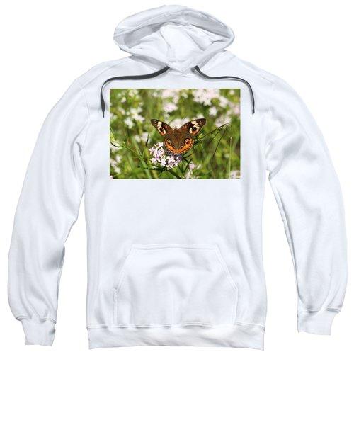 Buckeye Butterfly Posing Sweatshirt