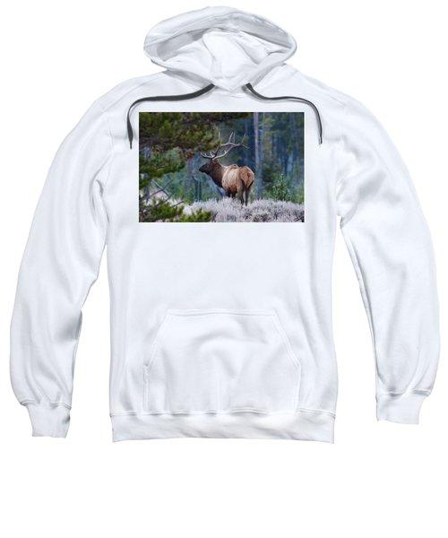 Bull Elk In Forest Sweatshirt