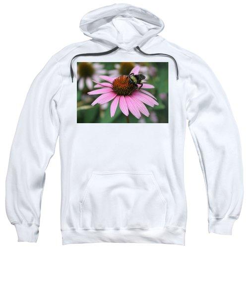 Bumble Bee On Pink Coneflower Sweatshirt