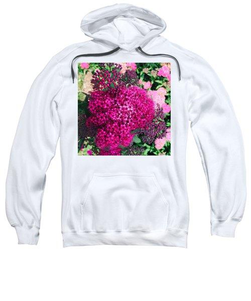 Burst Of Pink Delight Sweatshirt