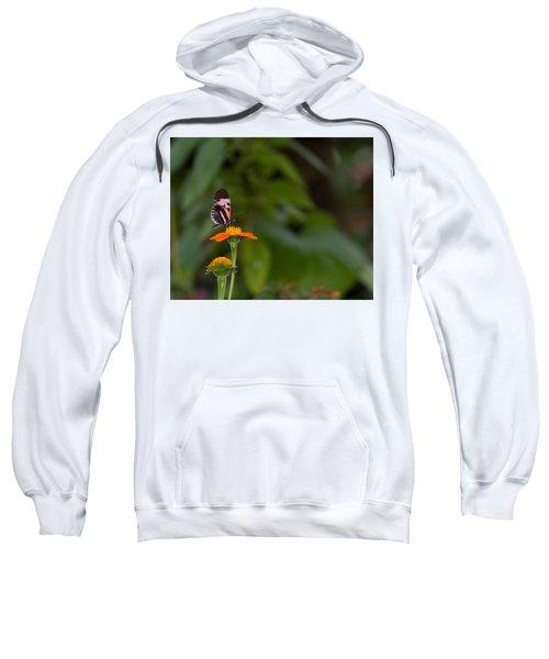 Butterfly 26 Sweatshirt