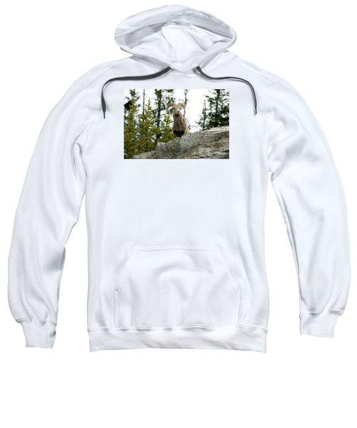 Canadian Bighorn Sheep Sweatshirt