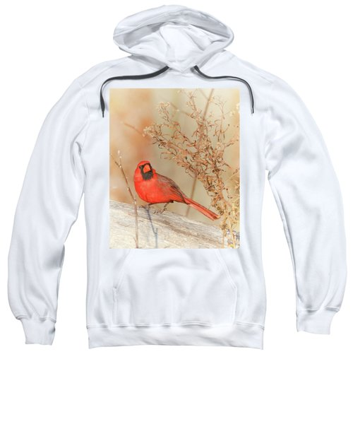 Cardinal In Fall  Sweatshirt