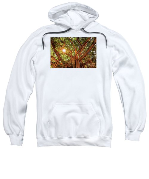 Catch A Sunbeam Under The Banyan Tree Sweatshirt