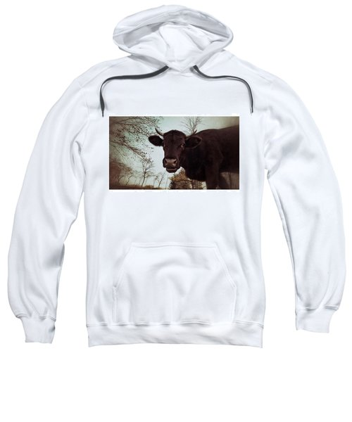 #cattle #kuh #rind #weide #herbst Sweatshirt