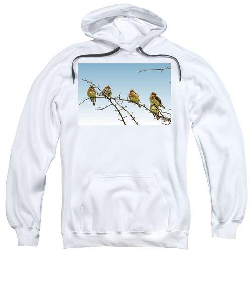 Cedar Waxwings Sweatshirt by Geraldine Scull