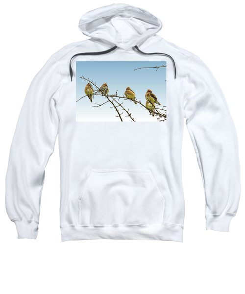 Cedar Waxwings Sweatshirt