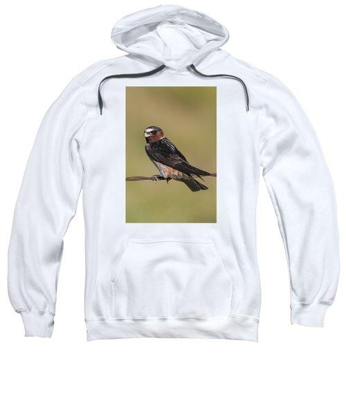 Cliff Swallow Sweatshirt