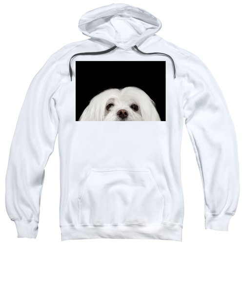 Closeup Nosey White Maltese Dog Looking In Camera Isolated On Black Background Sweatshirt