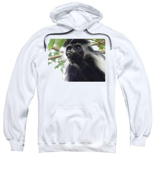 Colobus Monkey Eating Leaves In A Tree 2 Sweatshirt