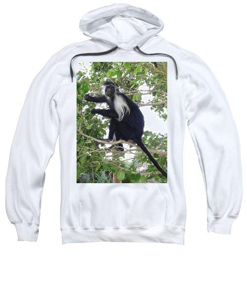 Colobus Monkey Eating Leaves In A Tree Sweatshirt