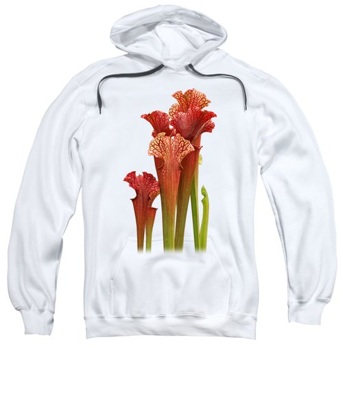 Come Into My Parlour - Carnivorous Sarracenia Sweatshirt
