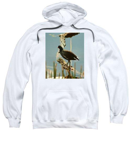 Common Moor Hen Sweatshirt