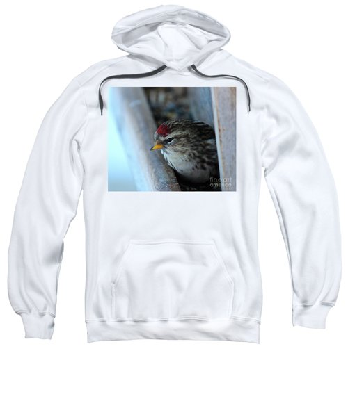 Common Redpoll Sweatshirt