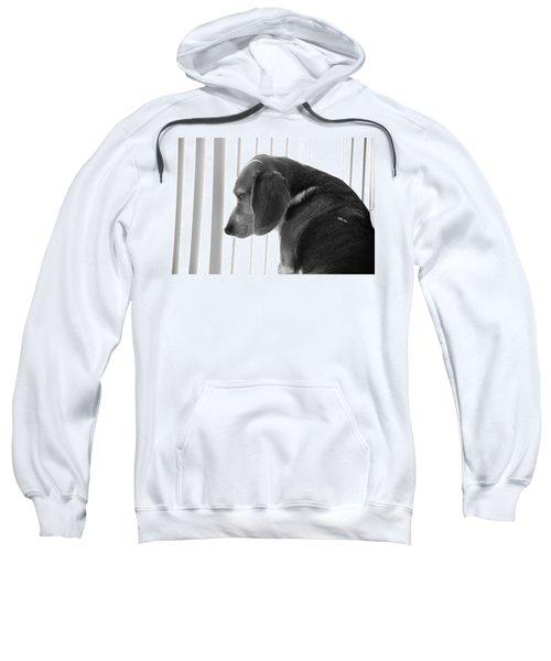 Contemplative Beagle Sweatshirt