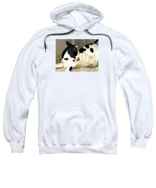 Cow Cutie Sweatshirt