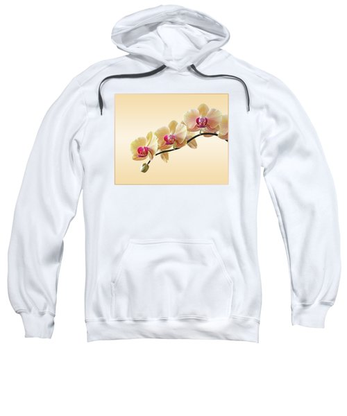 Cream Delight Sweatshirt by Gill Billington