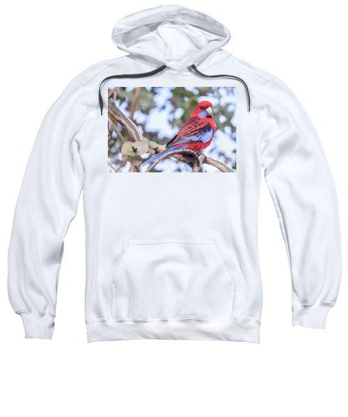 Crimson Rosella 03 Sweatshirt