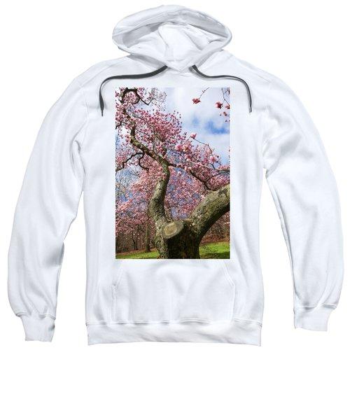 Crooked Magnolia Sweatshirt