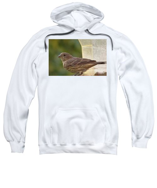 Crossbill Female Portrait      September    Indiana Sweatshirt by Rory Cubel