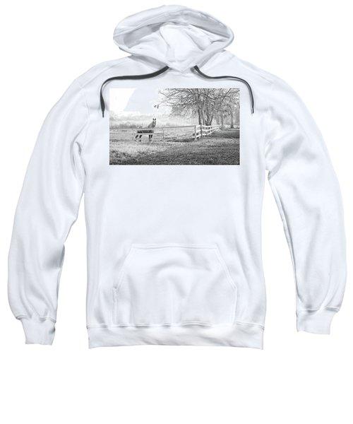 Curious Fog Sweatshirt