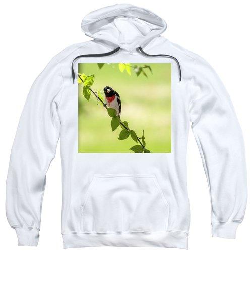 Cute Rose-breasted Grosbeak Sweatshirt