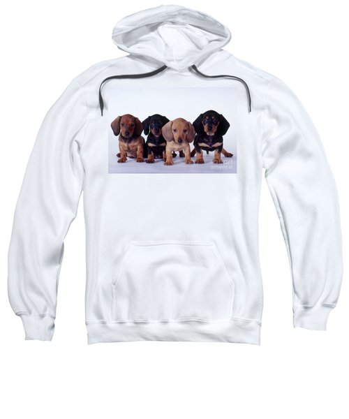 Dachshund Puppies  Sweatshirt