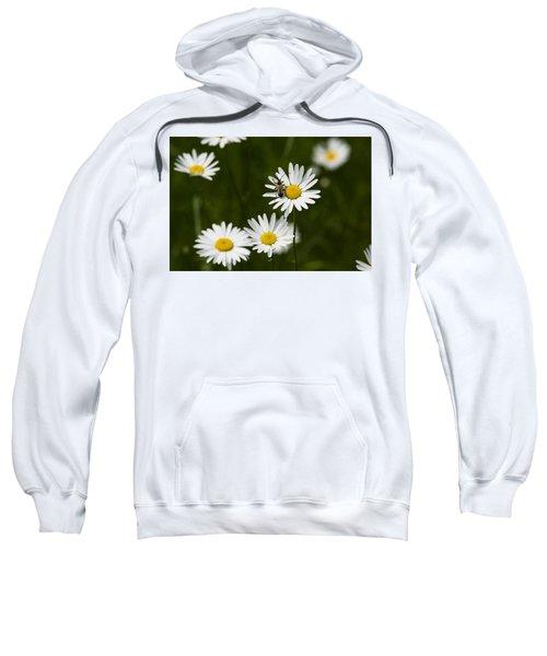 Daisy Visitor Sweatshirt