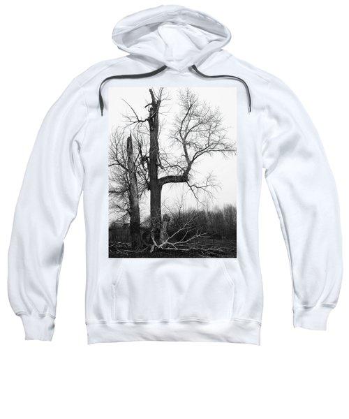 Dead Tree Ten Mile Creek Sweatshirt