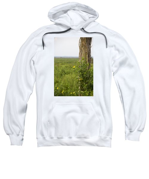 Entrance Sweatshirt