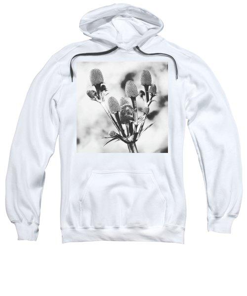 Eryngium #flower #flowers Sweatshirt by John Edwards