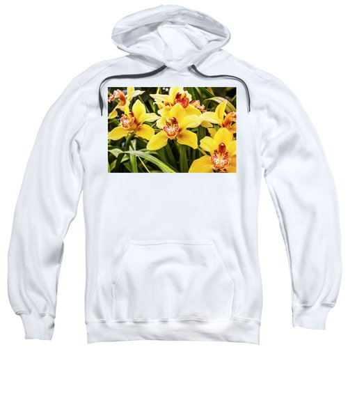Exotic Orchids  Sweatshirt
