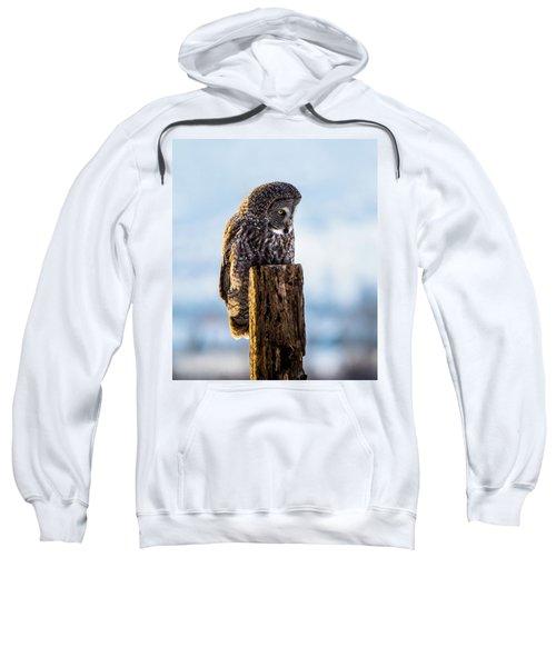 Eye On The Prize - Great Gray Owl Sweatshirt