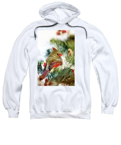 Female Northern Cardinal Sweatshirt