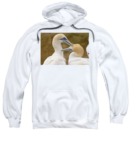 Sweatshirt featuring the photograph Gannet Pair 1 by Werner Padarin