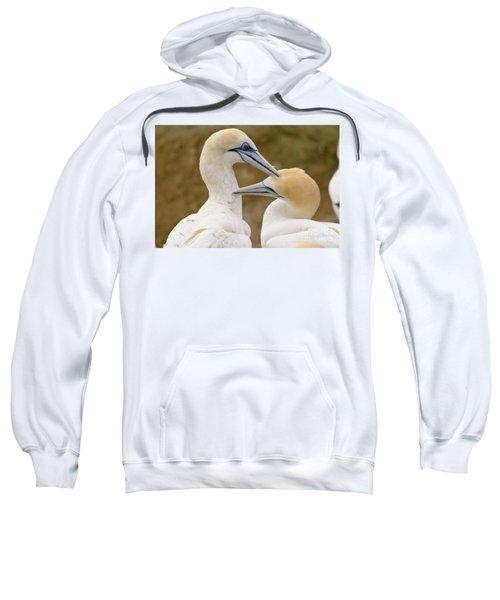 Gannet Pair 1 Sweatshirt