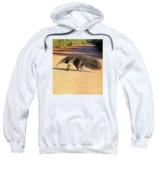 Giant Anteater Crosses The Transpantaneira Highway In Brazil Sweatshirt