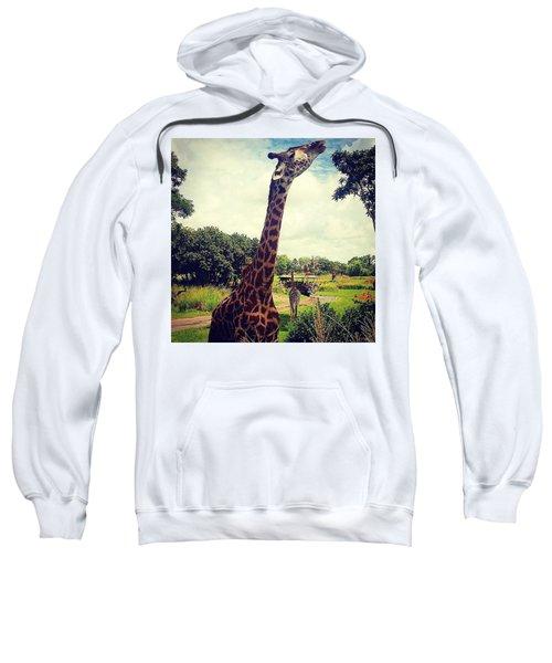 Posing Giraffe  Sweatshirt