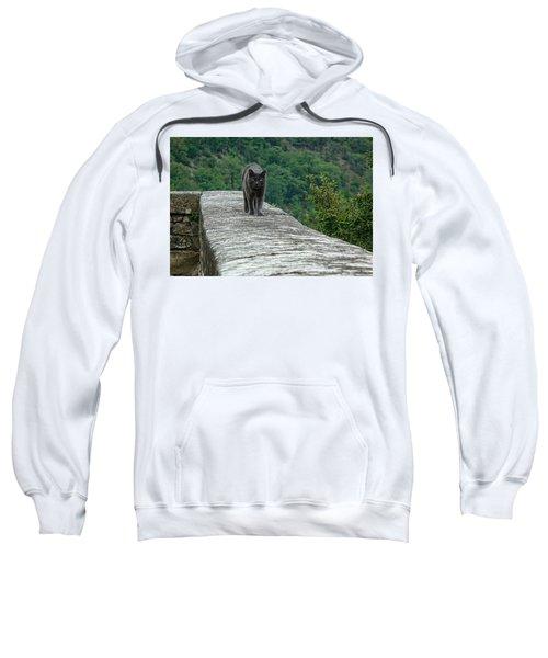 Gray Cat Prowling Sweatshirt