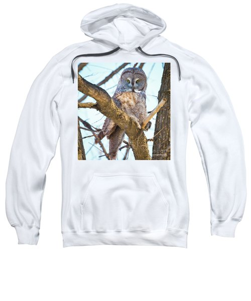 Great Gray Owl Sweatshirt by Ricky L Jones