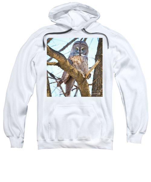 Great Gray Owl Sweatshirt